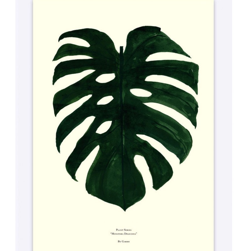 Monstera Deliciosa By Garmi (Colour) Poster