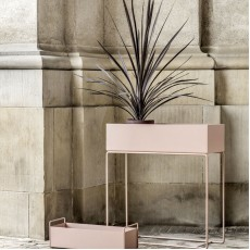Contemporary  Houseplants,  Plant Pots and Planters