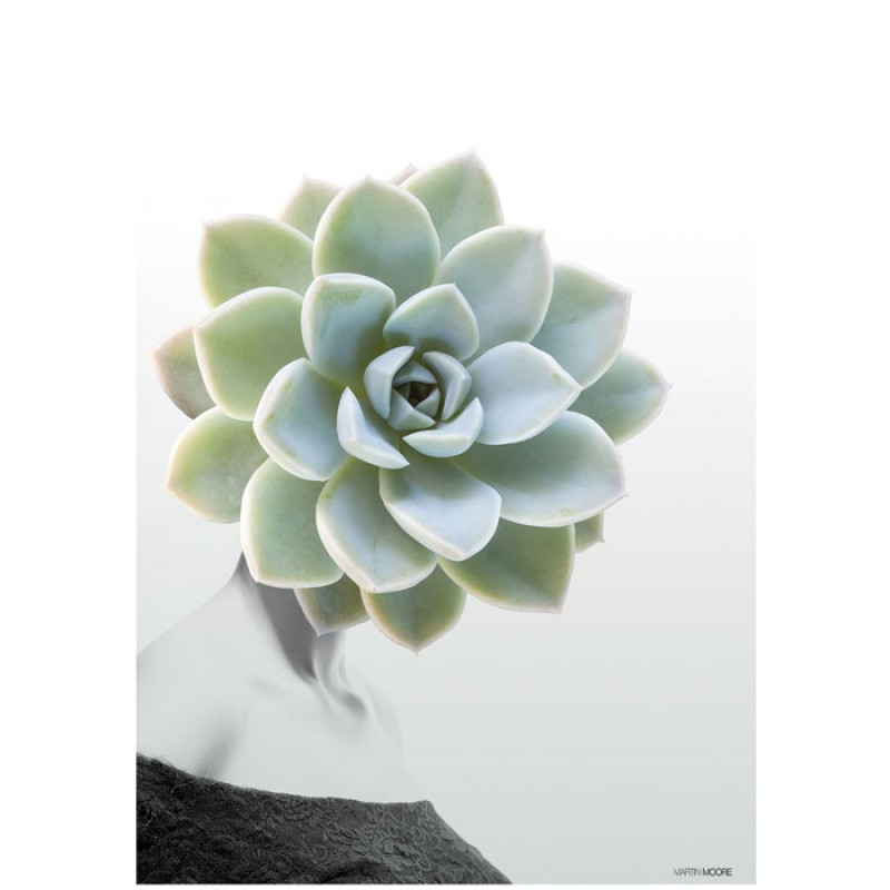 Martin Moore Succulent #1 poster