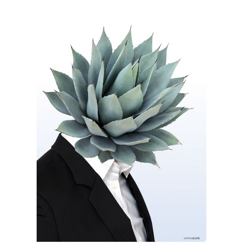 Martin Moore Succulent #2 Poster